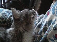 おやぢと風鈴の猫日記-2008123114330000.jpg