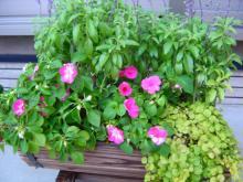 マミーとジイの草物の寄せ植え