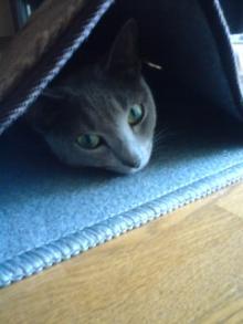 たかが猫 されど猫-フジ子ちゃん、明日は箱根なんだよ