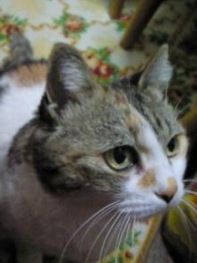 ~うちのデブ猫~-♪