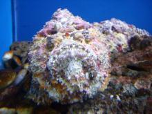 聖亜珊瑚世界7