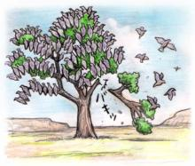 木に休むリョコウバトの大群
