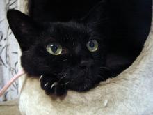 お決まりポーズの黒猫
