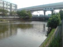 荒川のバス釣りおすすめポイント13選!魚種ごとの …