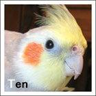 テンちゃん(2005年8/25・生まれ)