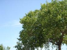 20080503-木と空