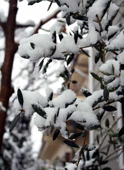 関東地方 2年ぶりの大雪