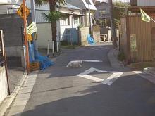 宮城県の猫さん-1