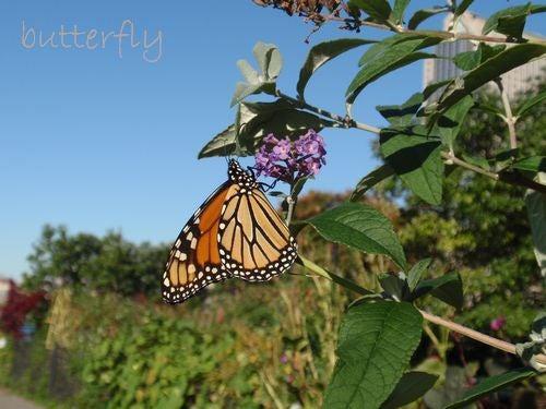 1142butterfly
