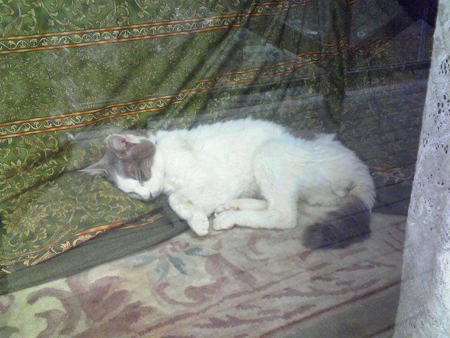 臣の野良猫仕事日記-200902160832000.jpg