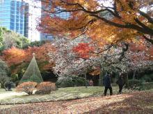 小石川後楽園紅葉