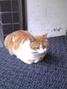新宿でサロンを経営する癒し王ふじのblog-猫