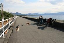 歩き人ふみとあゆみの徒歩世界旅行 日本・台湾編-浜の猫たち