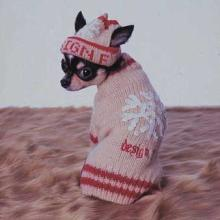 Dog_Winter
