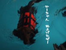 泳げたぜ!