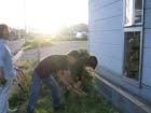夕日の中で草むしり。