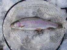 Fishing Blog OFFSHORE CRAZY! ~ 夢は一発大物!   鮪だ!鰤だ!大政だ!巨カンパだ!大鯛だ!なんでもこ~い!-にじ