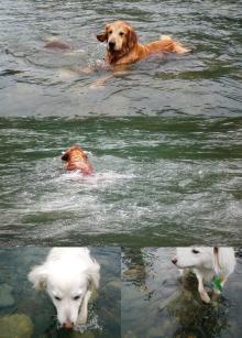 リリー お構いなしに泳ぎまくるラッキー((爆))