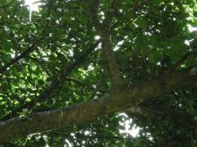 雨上がりの木