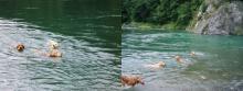 やっぱりゴールデン達には'水'が似合います!(^^)!