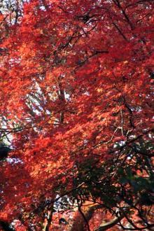 カルマンギアのある生活-六義園の紅葉