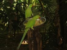 BIRD PARADISE-020