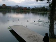 大沢池と水鳥