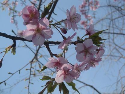☆HAPPYを探して☆プチセレブ☆私の贅沢☆☆全公開☆-桜