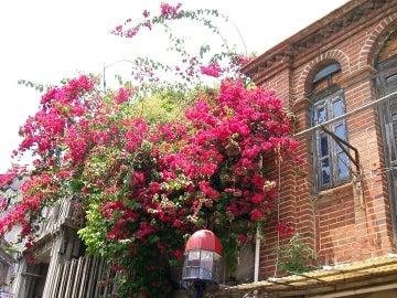 赤い花と洋館