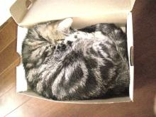 boxにゃにゃ