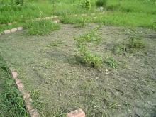 草刈り半分しました