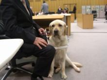 盲導犬リチャード 2