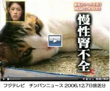 女子大生画像動画白書とは-猫の腎不全