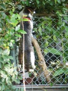 フェンス猫