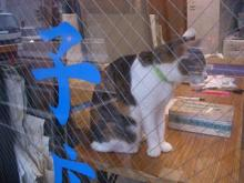 硝子屋さん猫-2