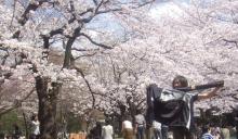 桜0327-2