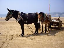 西中島 馬
