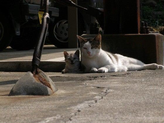 仔猫と茶白