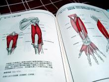 骨格筋の解剖1