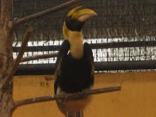 BIRD PARADISE-026