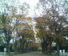 2006.11.26park