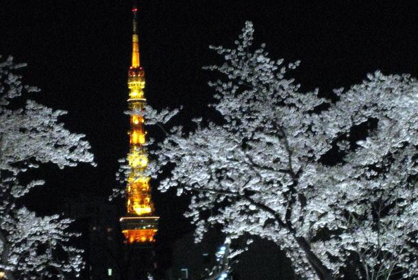 Midtown 桜