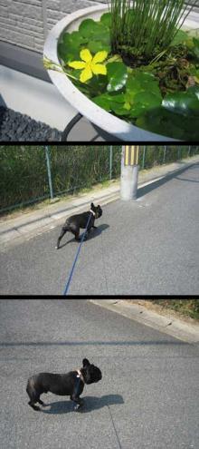 散歩no日々