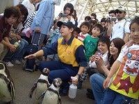 ペンギンと歩こう