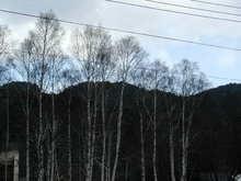 奥日光冬景色ー3