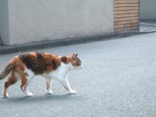 歩くりっちゃん