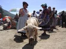 オリンテペケの家畜市
