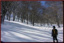 ロフトで綴る山と山スキー-見事なブナ林