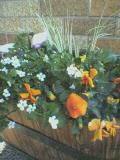 お花が咲いた