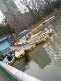中島公園 ボート 菖蒲池